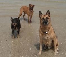 Akira, Poldi and Rex