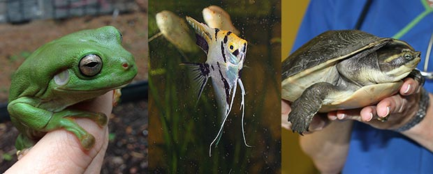 Frogs, Fish, and other Exotic Pets
