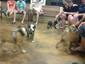 Puppy Preschool Class in Action